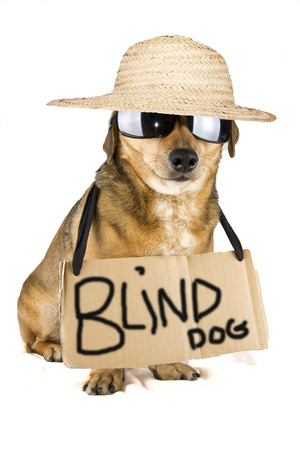 blind dog Stock Photo