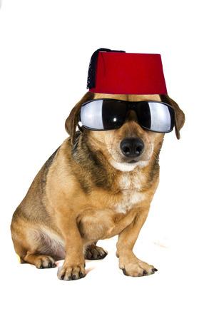 fez blind dog photo