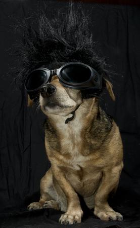 dog rock: a rocker dog