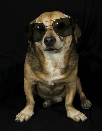raperos: gafas de sol de perro