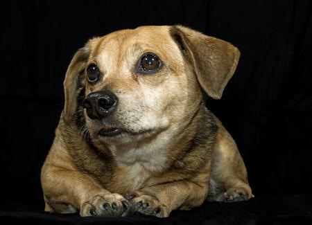 sad little dog