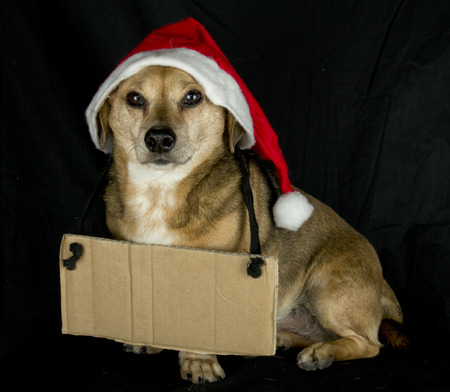 oration: christmas dog and cartel Stock Photo