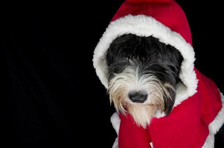 little christmas dog photo