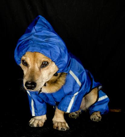 rain dog photo