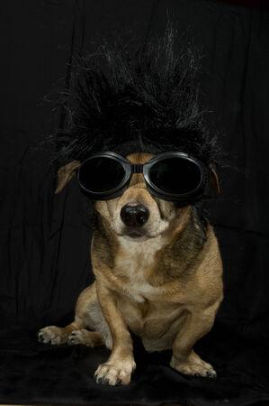 dog rock: little punk dog Stock Photo