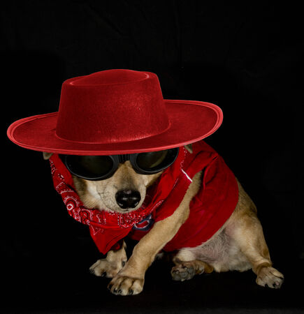 red gangster dog photo