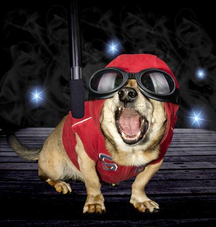 cantando perro y micrófono Foto de archivo