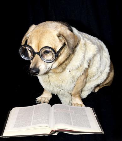 dog read book photo