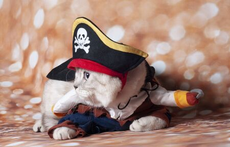 a carribean cat pirate in the gold background and hat 版權商用圖片
