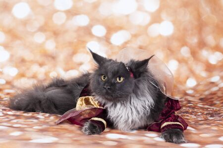 a princess cat in the gold bacground and red dress in the body
