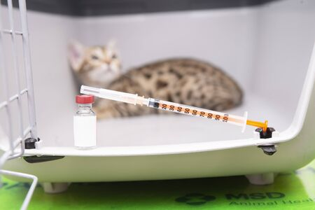 a cat is vaccinated on the vet's table