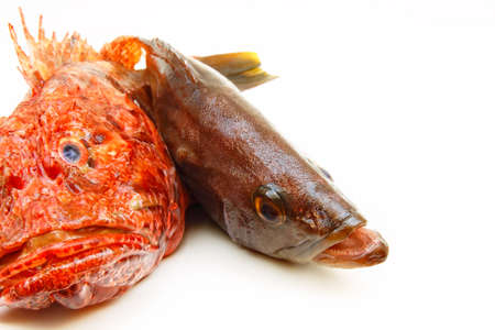 grouper: Mediterranean scorpion fish and grouper isolated on white