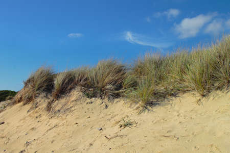 vegetation: Mediterranean coastal dunes and typical vegetation