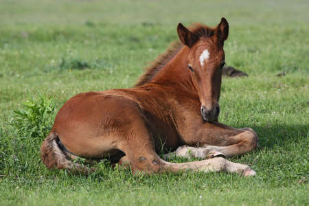 Beautiful little horse in the field Stock Photo