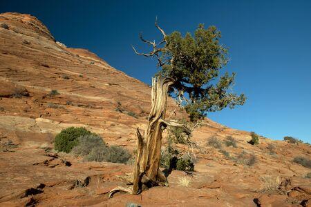 coyote: Coyote Butte, Vermilion Cliff, Arizona