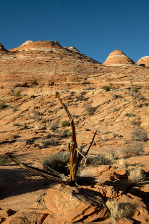 vermilion: Coyote Butte, Vermilion Cliff, Arizona