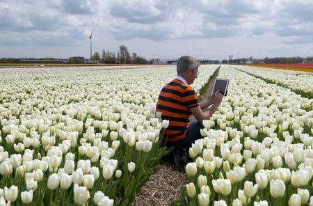 Business Man at Work, Netherland
