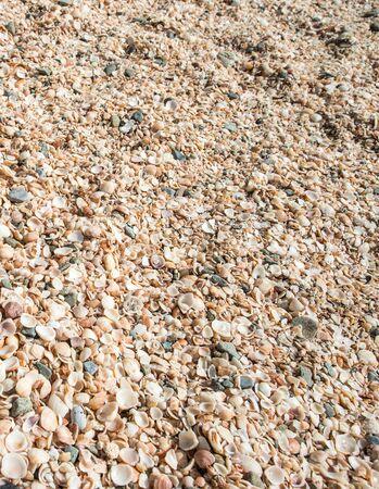 and saint: Shell beach, Saint Barth