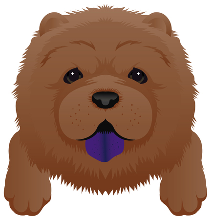 chow: Chow brown puppy dog. Illustration