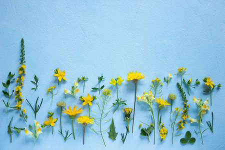 Composition from various wildflowers on a light blue background. Selective focus.