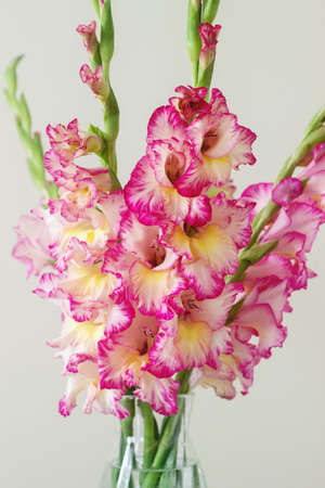 A Bouquet Of Multicolored Gladioli In A Glass Vase On A Light