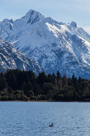 View of a duck on the lake of Colonia Suiza - Bariloche. Andes mountain range in background