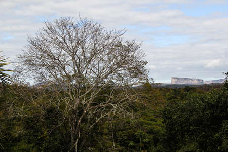 Hills in Chapada Diamantina - Bahia, Brazil Imagens