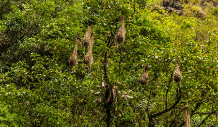 Nest Birds in the Bolivian Jungle
