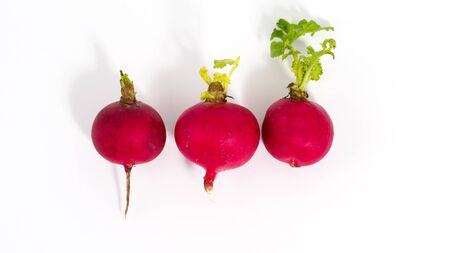 Fresh isolated radish on white background. Closeup view of organic vegetable with copyspace for text.
