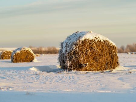 Haystack on the field in winter. Round bale of straw covered with snow. Stok Fotoğraf