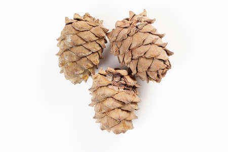 ripe pine cones on a white background, isolated
