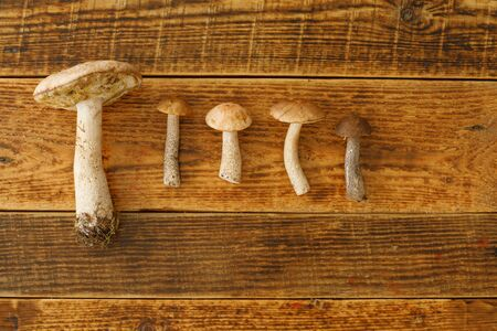 Boletus mushrooms laid out on a wooden background. The concept of geometric calculations. View from above. Flat lay.