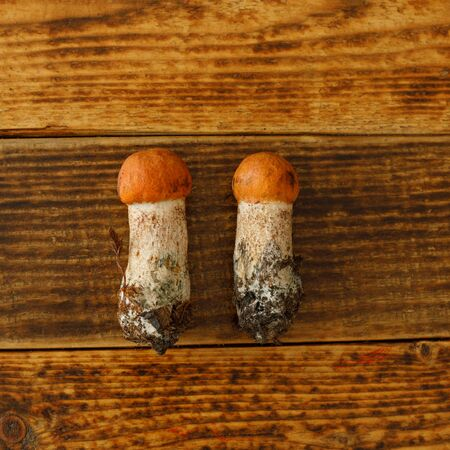 Two redhead mushrooms laid out on a wooden background. View from above. Flat lay.Square.