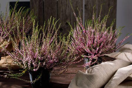 Waldheide hautnah. Stillleben auf einem hölzernen Hintergrund. Schöne blühende Heide. Standard-Bild
