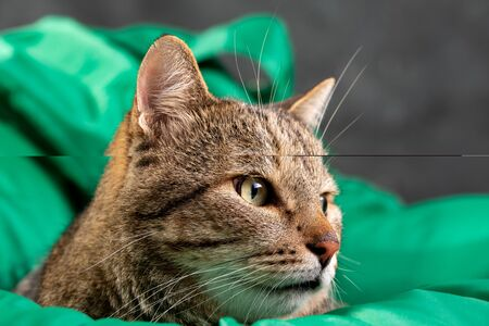 Cat face in profile on a green background. Gray tabby cat. Cat food cover. Adult cat.