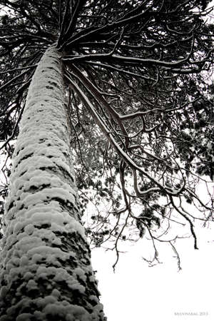 Winter forest concept. Trees in a snowy forest. Archivio Fotografico