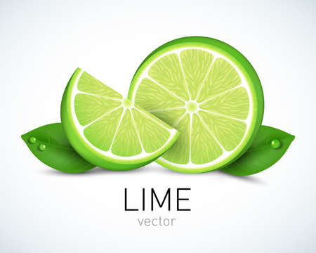 Fresh lime slice with leaves isolated on white background. Vector illustration for decorative poster, emblem, natural product, farmers market. Perfect for packaging design of cosmetics and food.