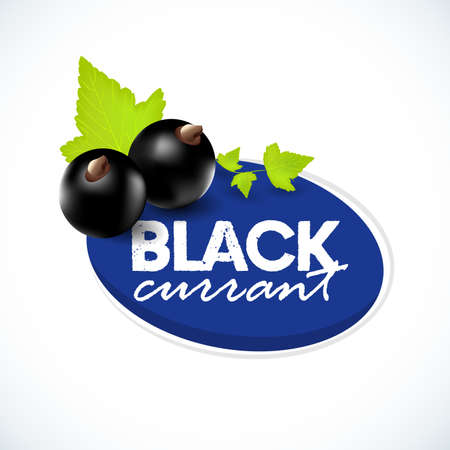 realistic black currant with leaves. Black currant label. Black currant isolated on white background. Ilustrace