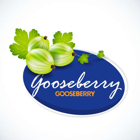 Vector illustration on the theme of the logo for gooseberry still life composition, consisting of ripe gooseberry with green leaf. Isolated vector illustration.