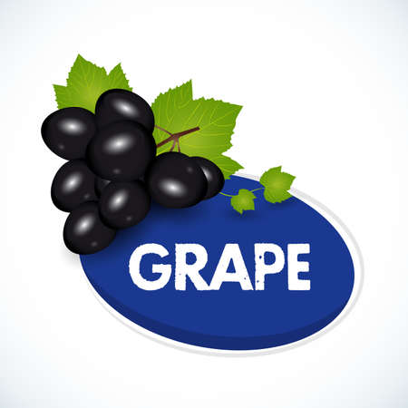 Grape label template. Bunch of black grapes with leaves isolated on white background. Vector illustration.