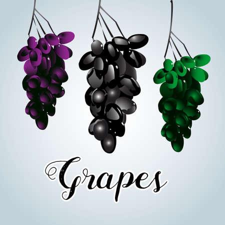 Three varicoloured clusters of vine. Isolated vector illustration