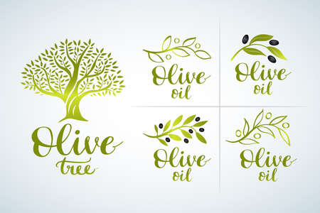 Natural olive oil tree for olive grove. Olive Oil set and brush lettering, label, organic product. Vector olive branch with leaf and drupe,
