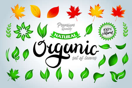 Set of colorful green and autumn leaves and organic lettering and design elements. Vector illustration. Ilustração