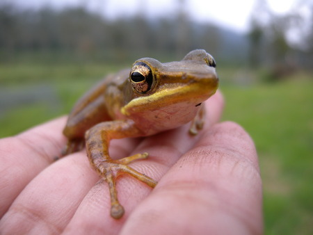 part frog: Little Frog on Hand Stock Photo