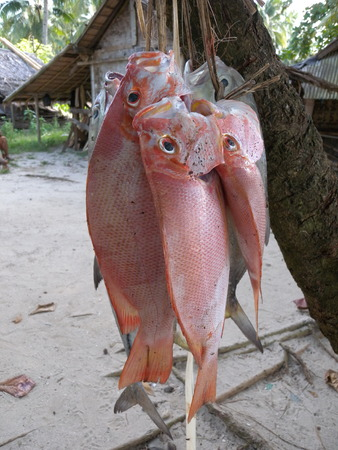 The fish were obtained from sea fishing Stock Photo
