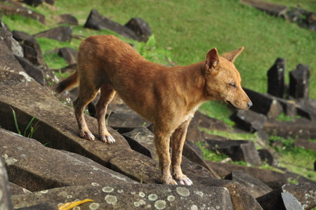megalith: Golden dog stay on stone Stock Photo