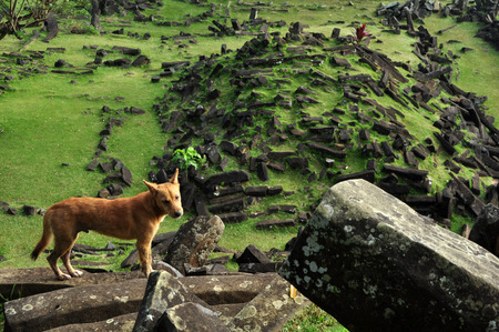 megalith: Golden Dog in Megalithic Site