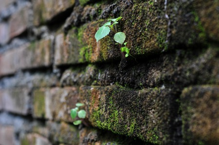 Little Plant Life on Break Stock Photo