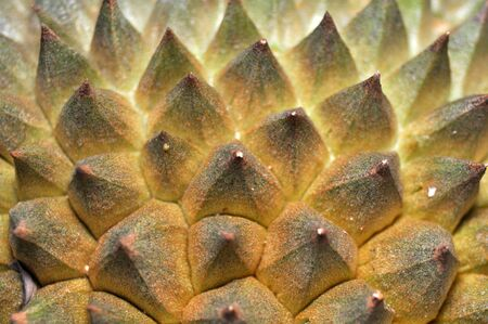 Sharp durian fruit skin detail