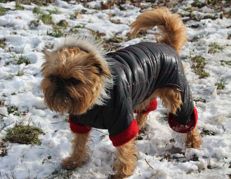 rock wool: cute dog in winter clothes